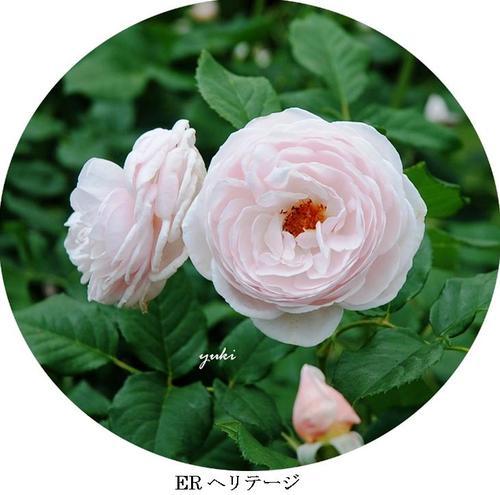 B16er_2a