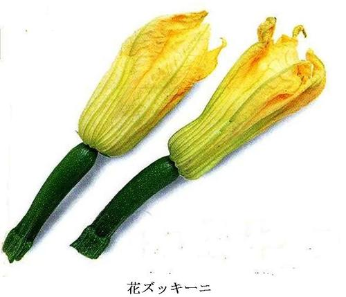 ズッキーニの旬は夏で、果実と花が食材として用いられます。果実は開花して4,5日後の幼果(長さ20cm程度のもの)を食用