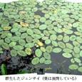 m深泥池7