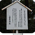 k上賀茂神社と下鴨神社11