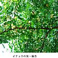 k京の秋5