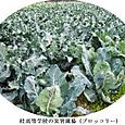 k桂高校農産物品評会2