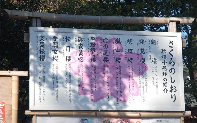 h平野神社7:桜のしおり