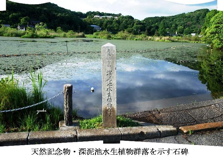 m深泥池1
