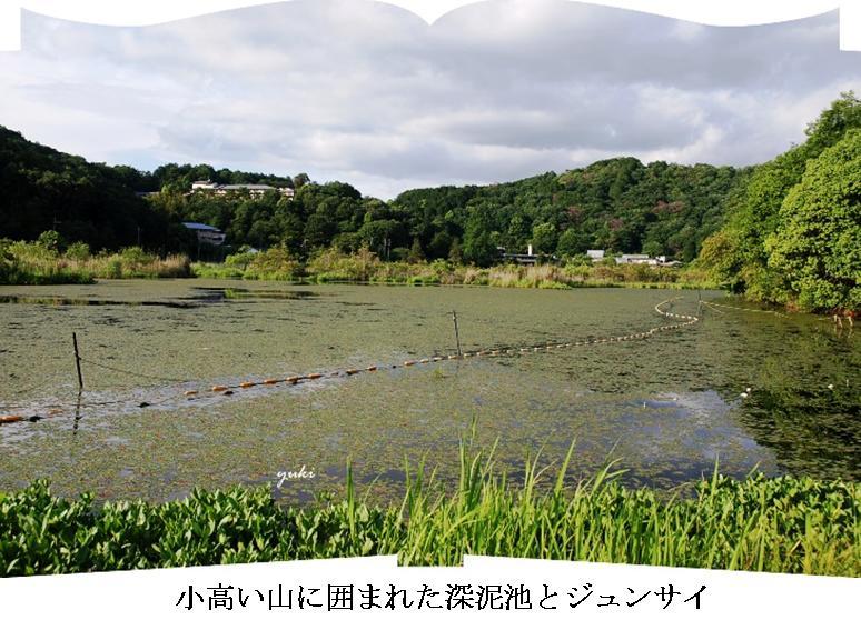 m深泥池5