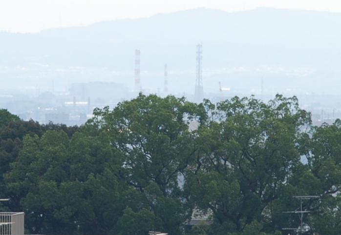 m6平野神社の木立