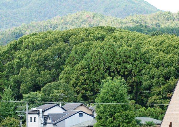 m11金閣寺の木立