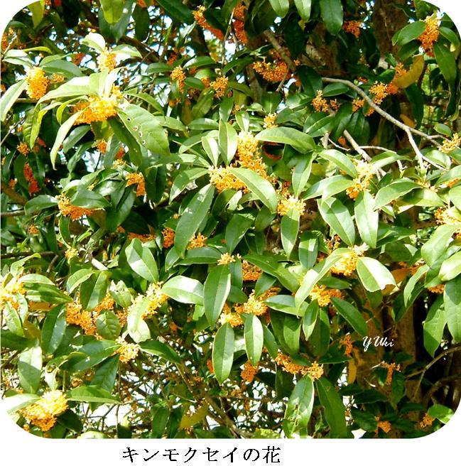 k京の秋2