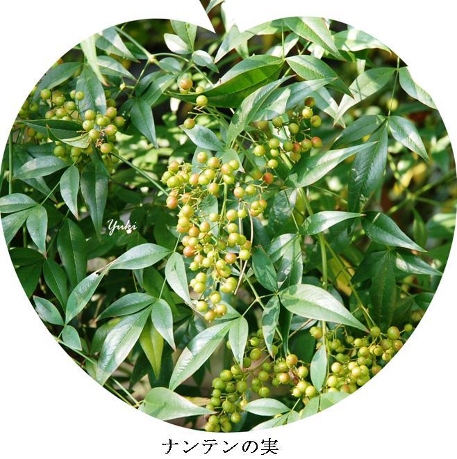 k京の秋8