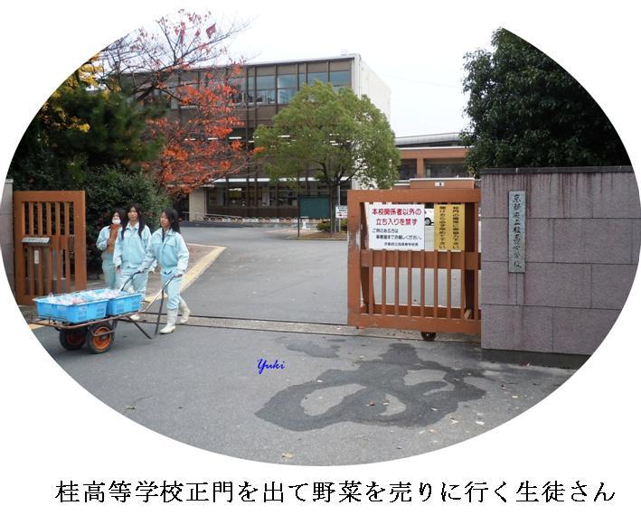 k桂高校農産物品評会1