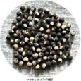 フウセンカズラ4:球形の種子