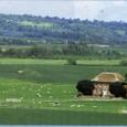イギリス1:3 なだらかなイングランドの丘陵と羊たち