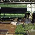 オランダ12:移動式の光合成測定装置