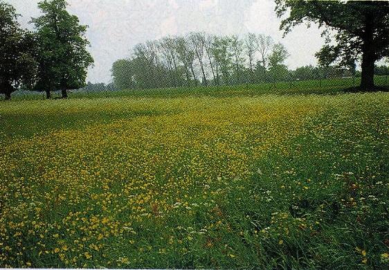 イギリス1:16 ロザムステッド試験場の施肥試験地と植物の遷移