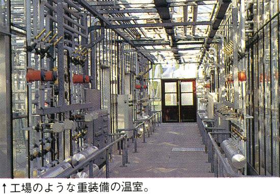 オランダ15:工場のような重装備の温室