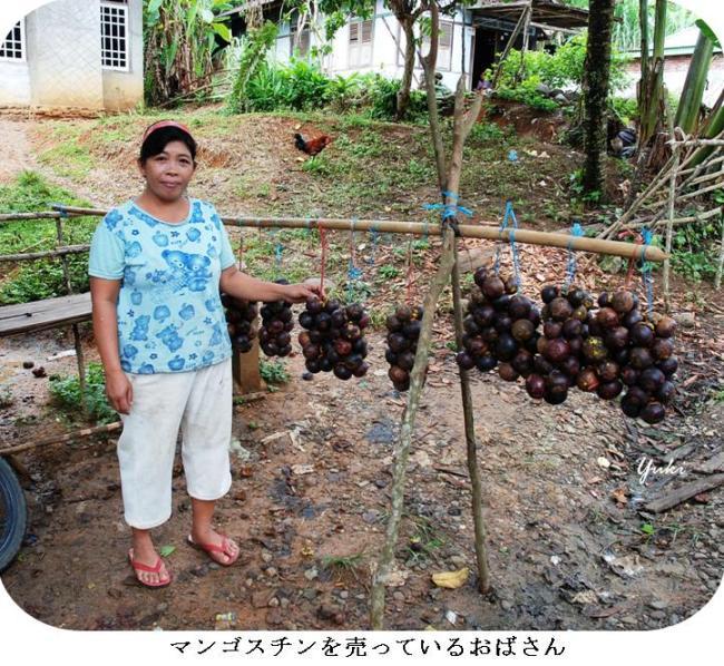 マンゴスチン2:果物の女王