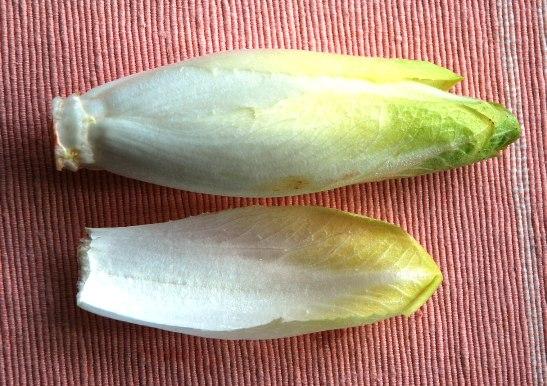 chiチコリ3の軟白した葉
