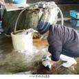 t徳島・びんび屋6:ハマチのさばき