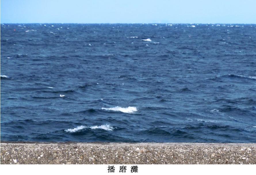 t徳島・びんび屋5:播磨灘