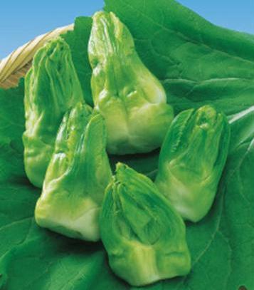 d伝統野菜11