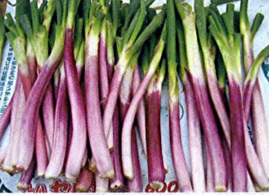 d伝統野菜3