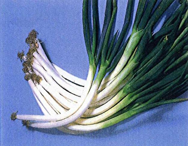 d伝統野菜4