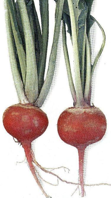 d伝統野菜8