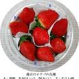 イチゴ大福1:最近のイチゴ品種