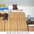 nネコ人形11