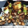 サトイモの花5